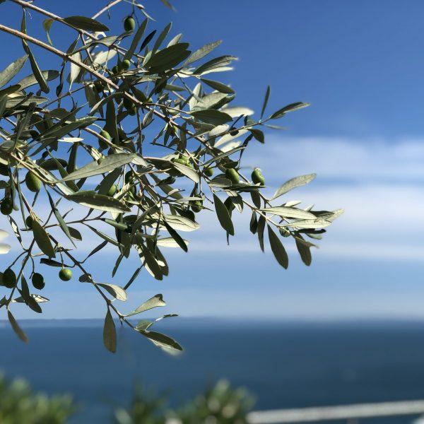 CáCedro_Lake Garda_outside_1_3_web
